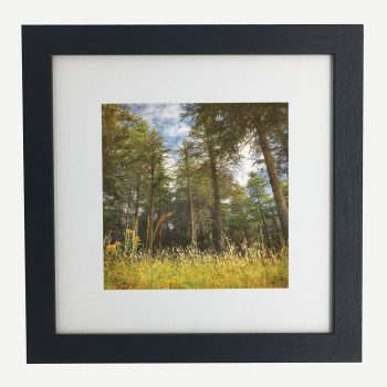 SummerPines-framed-wall-art-photography-art-black-frame