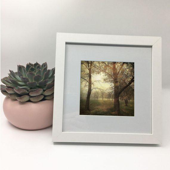 MawsonPlayingFields2-framed-wall-art-photography-art-white-frame-situ